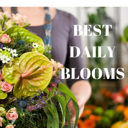 Best Daily Blooms